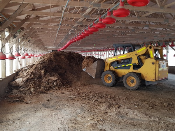 Chicken manure prepared for baling